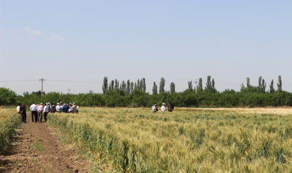 خبرنگاران 156 طرح در مراکز تحقیقات و آموزش کشاورزی آذربایجان غربی در حال اجراست