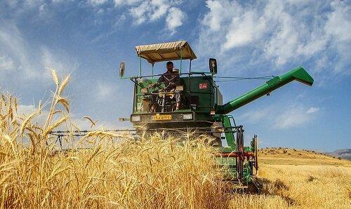 کرمانشاه رتبه پنجم فراوری گندم کشور را دارد