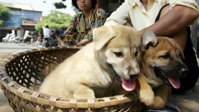 مسئولان ویتنام به مردم: گوشت سگ نخورید