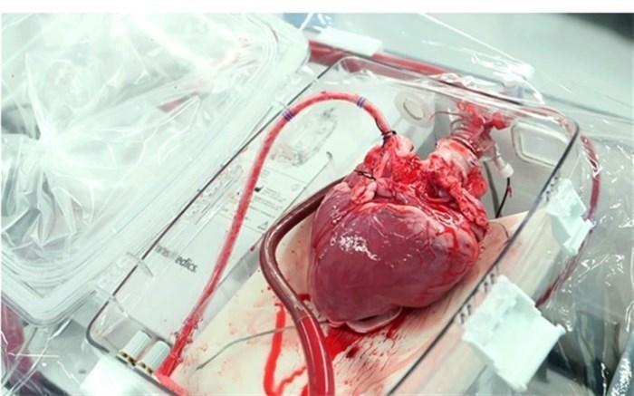 هفتمین انتقال هوایی قلب پیوندی در امسال موفقیت آمیز بود