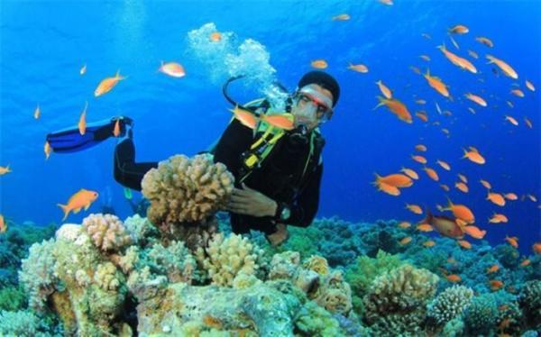 جزیره مرجانی خارگ دیگر مرجان ندارد!