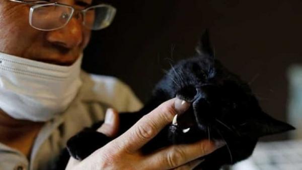 نجات حیوانات شهر ارواح به دست مرد ژاپنی